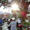 ベトナムのバイク事情